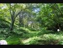 電気イルカの森
