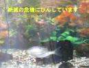 淡水魚 ヤリタナゴ