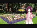 かわいい洋服のきりたんと花壇で【VOICERO
