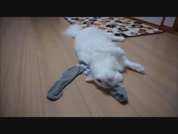 【HR299】使用済み靴下にメロメロな猫