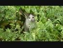 草むらをよ~く見たら野良子猫がこちらを凝視していた