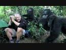 野生のゴリラの群れと遭遇したおっさん