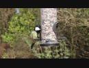 Bird Feeder 辻泰秀