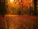 木枯らしが吹く音と枯葉が舞い落ちる音(睡眠用BGM・作業用BGM)
