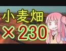 【kenshi】砂漠に小麦帝国ver×230小麦畑
