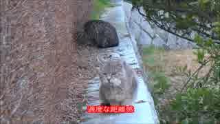 【猫】3種類詰め合わせ!若者から枯れ専まで