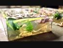 シマヘビとミシシッピアカミミガメを懐石料理にしようZE!