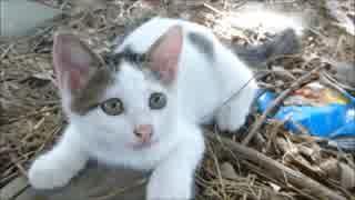 母猫が見てる前で、野良子猫が怯えながら