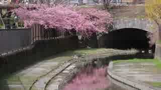春の京都(2018/3/18)