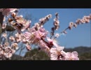 大阪市立大学理学部附属植物園梅園