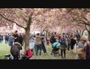 ニューヨークの桜まつり【小斎直也ワールド】