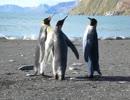 肌が触れ合っている間だけお祭りマンボが流れるペンギン