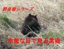 冷徹な目で見る黒猫・・・・野良猫シリーズ