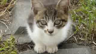 野良猫の集会に乱入したらやたら可愛い子