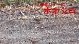 野鳥シリーズ シジュウカラ ホオジロ・・・