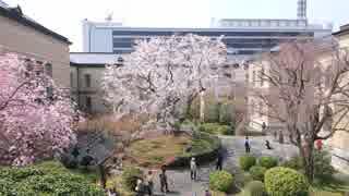 桜の京都(2018/3/25)
