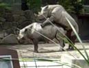 カミーユ 動物園へ
