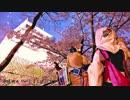 【刀剣乱舞】千本桜踊ってみた【義経主従】