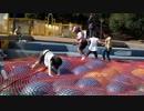 ★【蜻蛉池公園:こどもの国】チョウの遊具 カラフルなボールトランポリンで遊ぶあい❤TONBOIKE PARK  お出かけ★