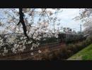 一目千本桜と電車 その4