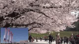 福岡城桜まつり