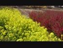 花見山 その2