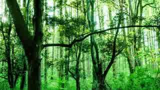 エルフの森