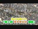 釣り動画ロマンを求めて 番外編(第2回 テナガエビ調査 in多摩川)