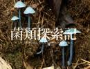 【キノコ狩り_20180310】 菌類探索記 「今更新年のご挨拶」