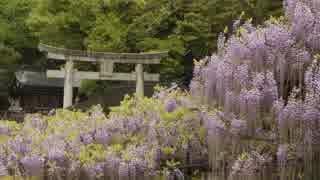 【ゆっくり】徒歩で日本一周part280【大分