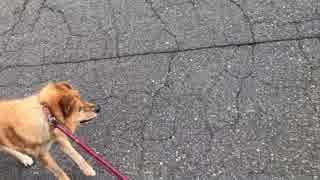 集団予防接種に連れてこられた犬。だんだんと順番が近づいて・・・