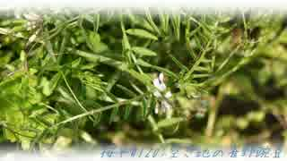 【NNI】桜平#120:空き地の雀野豌豆【f00005j】【MuseScore】