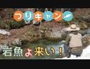 【つりキャン②】春の雪山でソロキャンプ&渓流釣りしてきた! -釣り編-