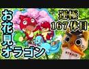 【モンスト実況】お花見オラゴンを運極にするの巻【運極167体...