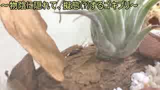 蟻戦争Ⅱ#15 【閲覧注意】ゴキブリをアリのテラリウムに解き放ってみた!編