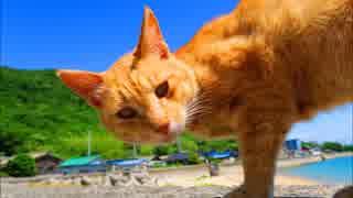 野良猫フォルダが火を噴くぜ「佐柳島編」