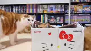 【マンチカンズ】キティちゃんの猫ハウス