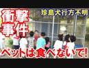 【韓国区役所で衝撃的な事件発覚】 子供たちのペットを食べち...