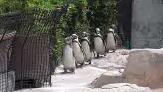 「ささだんご」ペンギンの大地に立つ