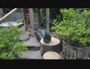 20180517 井の頭自然文化園のアライさん
