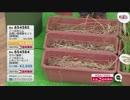 QVC福島 - お手軽雑草対策!レインボー薬品『除草剤』 ver.石橋