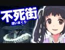しずくちゃんのダークソウル3 【実況】 #05