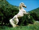 美しきお馬さん達