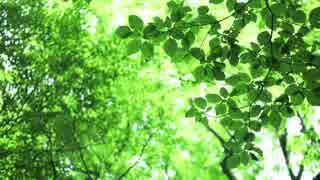 【オリジナル】新緑の森へ【インスト曲】