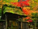 京都に行きたくなる動画 「そうだ、京都行こう」