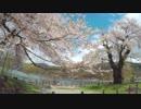 【うどんR】お花見サイクリング2018@荘川桜【ロードバイク】