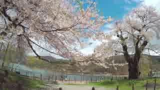 【うどんR】お花見サイクリング2018@荘川