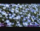【NNI】 Flower 【ピアス/オリジナル】