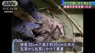 人気の「生き物苦手板」動画 9本...