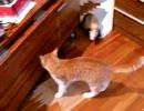 子猫 VS フェレット EX Stage1